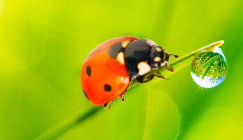 Tratamiento de plagas e insectos